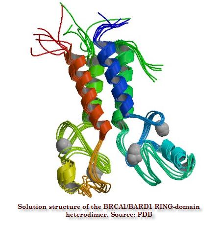 Myriad and BRCA1